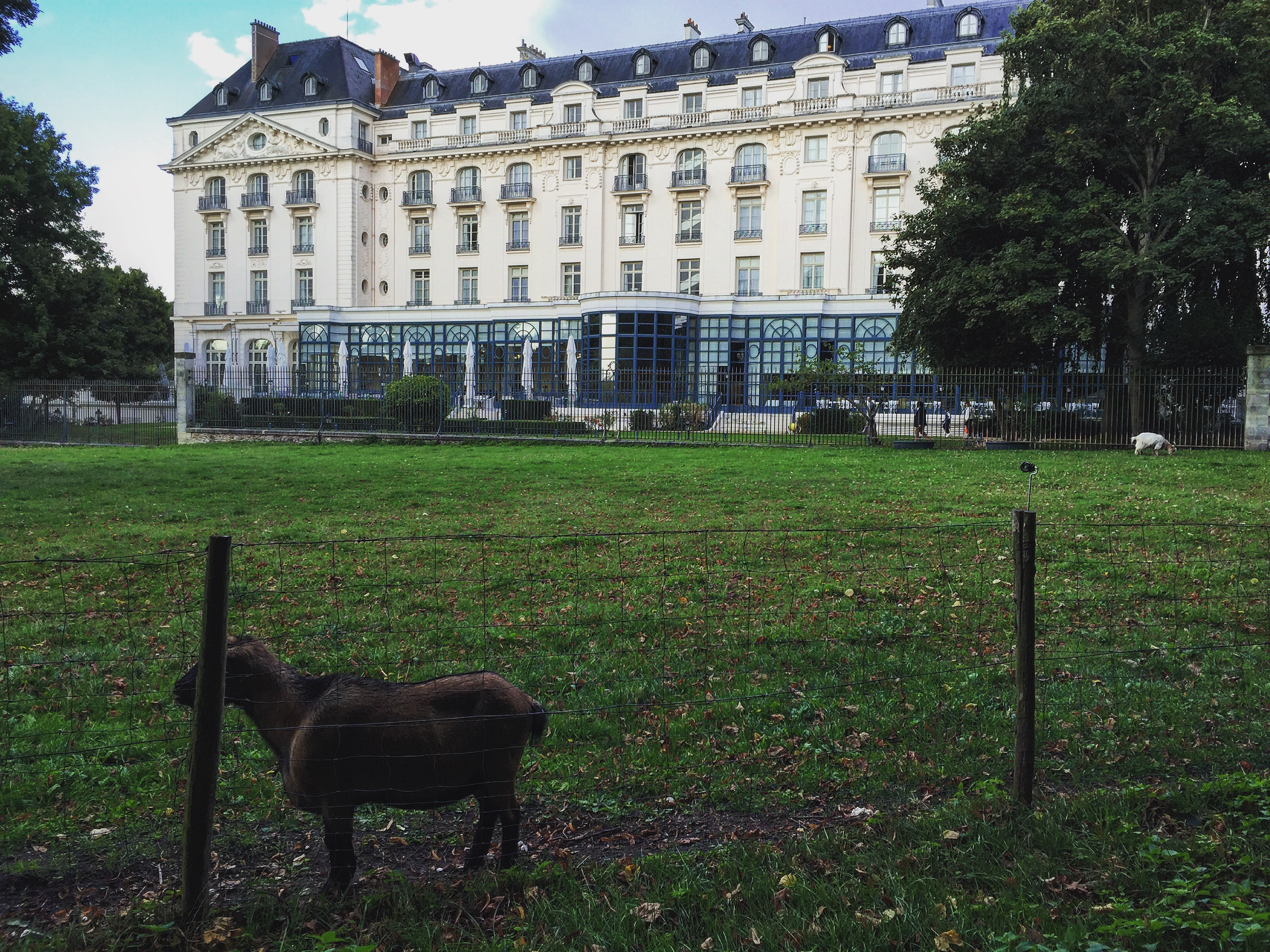 Goats farm along Allée des Moutons with the Trianon Palace in the background